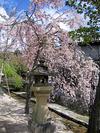 Miyajima06