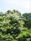 20100508_kamigamo2