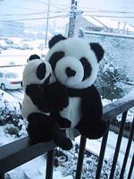 snowpanda